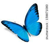 blue butterfly flying  isolated ... | Shutterstock . vector #158871080