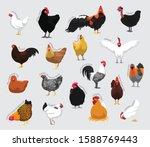 Chicken Set Various Kind...