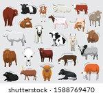Domestic Cow Set Various Kind...