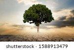 Single Big Tree With Crackle...