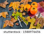 Autumn Leaves Of Various Color...