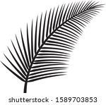 leaf of palm tree vector... | Shutterstock .eps vector #1589703853