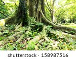 root in the garden | Shutterstock . vector #158987516