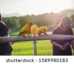 Beautiful Bird Pet Sun Conure...