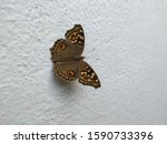 Beautiful Brown Color Butterfl...