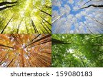 four seasons in the forest | Shutterstock . vector #159080183