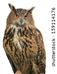 Stock photo eagle owl an eagle owl on isolate white background 159114176