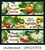 vegetables  farm market veggies ... | Shutterstock .eps vector #1591157473