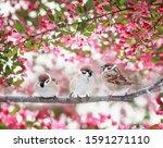 Three Sparrow Birds Sitting On...