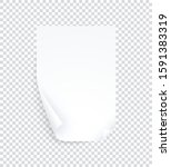 white a4 page with curled... | Shutterstock .eps vector #1591383319