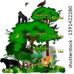 rainforest african jungle... | Shutterstock .eps vector #1591422280
