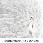 Close Up Of Beautiful White...