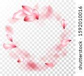 pink sakura petals falling... | Shutterstock .eps vector #1592010016