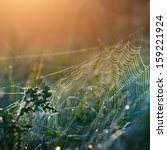 Beautiful Spider Web With Wate...