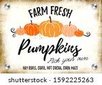 farm fresh pumpkins vector... | Shutterstock .eps vector #1592225263