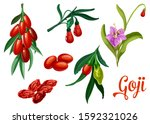 goji plant berries  vector... | Shutterstock .eps vector #1592321026