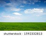 Beautiful Endless Field Of...