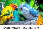 Lovebird Parrots Sitting...