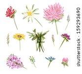 set of garden flowers  sketch... | Shutterstock .eps vector #159293690