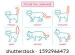 cat behavior infographic.... | Shutterstock .eps vector #1592966473