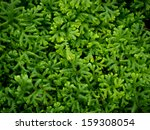 Green Moss Grass Background