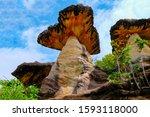The Million Years Mushroom...