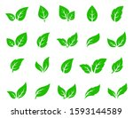 set of isolated green leaves... | Shutterstock . vector #1593144589