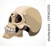 skull isolated on a white...   Shutterstock .eps vector #159341333