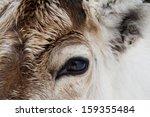 Close Up Of A Reindeer ...