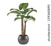 Decorative Palm Plant Tree In...