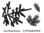 Branches Of Fir Trees. Set Of...