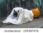 Halloween Dog Wears A Sheet ...