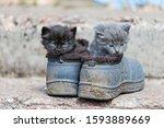 Little Kittens Hid Each...