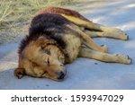 Small photo of Slumdog sleeping on the road