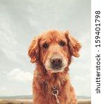 A Dog Enjoying The Outdoors O...
