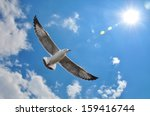 Flying Seagull In Sky With...