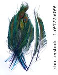 Small photo of Peacock feathers. Carnival. Colored feather on a white background