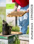 midsection of male beekeeper... | Shutterstock . vector #159430028