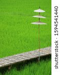 Small photo of Bamboo bridge with sunshade on the vibrant green paddy field