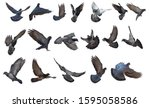 a collection of birds flying | Shutterstock . vector #1595058586