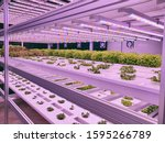 Small photo of Vegetables are growing in indoor farm/vertical farm. Plants on vertical farms grow with led lights. Vertical farming is sustainable agriculture for future food.
