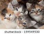 Cute Little Kittens With Blue...