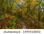 Autumn on the hiking trail.  Mississippi Palisades State Park, Illinois, USA