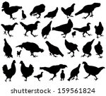 chickens and roosters ... | Shutterstock .eps vector #159561824