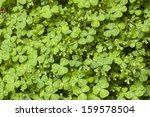 Clovers And Moss