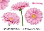 pink dahlia. chamomile flowers... | Shutterstock .eps vector #1596309703