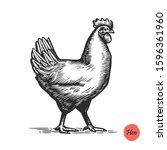 chicken hand drawn illustration ...   Shutterstock .eps vector #1596361960