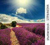 Beautiful Image Of Lavender...