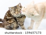 Couple Cat Lovely