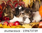 Stock photo cat and dog kitten and puppy 159673739